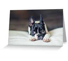 Fina the Boston Terrier Puppy Greeting Card