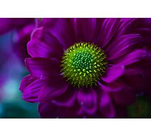 Flower-Infinity Photographic Print