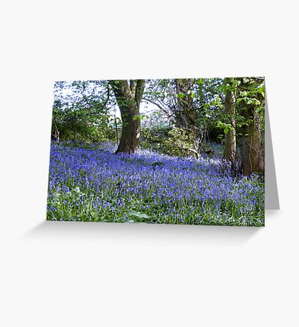Natures Garden : BlueBell Woods Greeting Card
