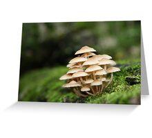 Fabulous Fungi Greeting Card