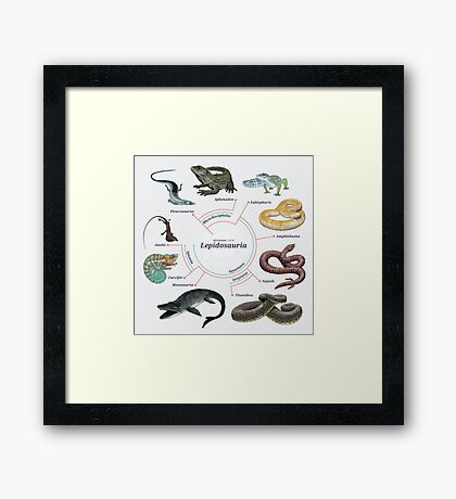 Lepidosauria: The Cladogram Framed Print