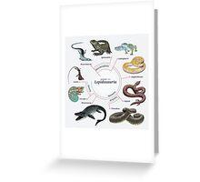 Lepidosauria: The Cladogram Greeting Card