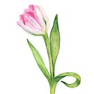 Tulip by Aleksandra Kabakova