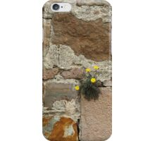 Flowers growing through cracks iPhone Case/Skin