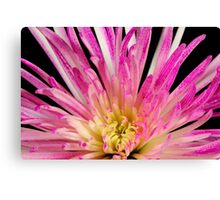 Flower- close up Canvas Print