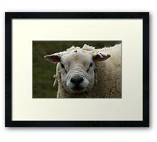 Jimmy. Framed Print