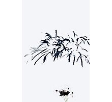 Fireworks Sumi-e Photographic Print