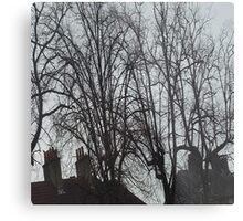 Tall Tree Rooftops Metal Print