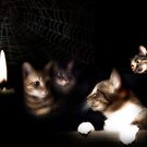 Midnight Plot by Christina Brundage
