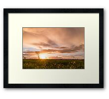 Panoramic view of a flowering  yellow daisy flowers Framed Print