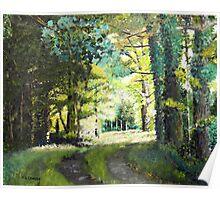 Green Forest back light Poster