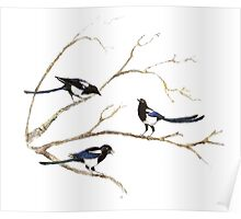 Watercolor Magpie Bird Family Poster