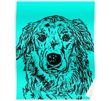 Golden Retriever Portrait Poster