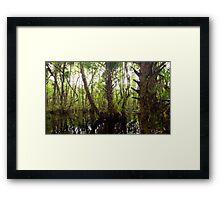 Mystic Swamp - Fakahatchee Strand Framed Print