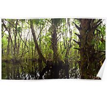 Mystic Swamp - Fakahatchee Strand Poster