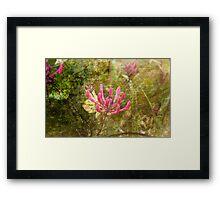 Summer Blossoms Framed Print