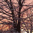 Winter Sunset by Redhead-K