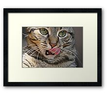 Eyeing The Prey Framed Print