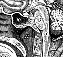 Anatomical Brain Drawing Sticker