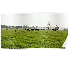 Green Meadow Landscape with Black Cows Poster