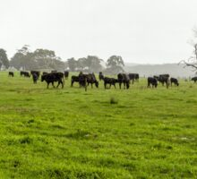 Green Meadow Landscape with Black Cows Sticker