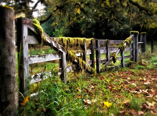 the Mossy Gate - Olympic National Park, Washington by Kathy Weaver
