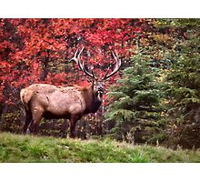 Elk Country Autumn Photographic Print