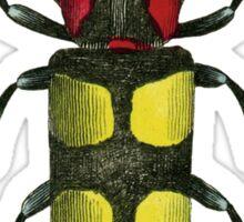 Big Beetle Bug Sticker