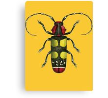 Big Beetle Bug Canvas Print