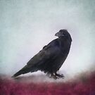 Raven by Priska Wettstein