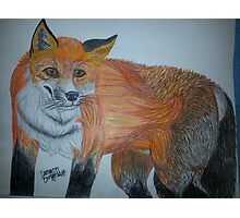 Fox of Wisdom Photographic Print
