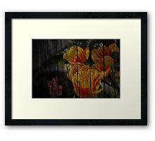 Antique Tulips Framed Print