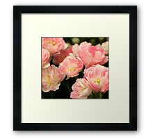 Pink Marshmallow Tulip Bunch Framed Print