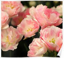 Pink Marshmallow Tulip Bunch Poster