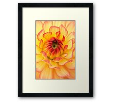 Springtime Golden Flower Petals Framed Print