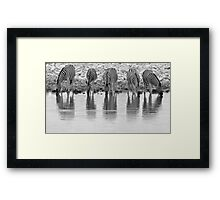 Zebra - Reflection and Iconic Black and White Nature Framed Print