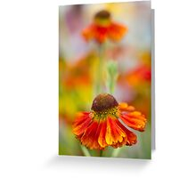 Colourful Springtime Flower Abstract Greeting Card