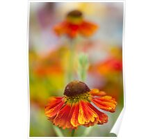 Colourful Springtime Flower Abstract Poster