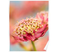 Soft Pink Flower Abstract Poster