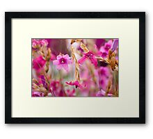Pink Toned Spring Meadow Framed Print