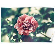 A Pink Flower in a Green World Poster