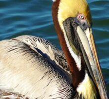 Posing Pelican Sticker