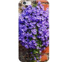 Purple Aubrieta iPhone Case/Skin