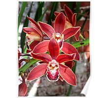 Key West Orchid Poster