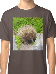 A echidna on food hunt Classic T-Shirt