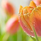Spring Pastels by Lynn Gedeon