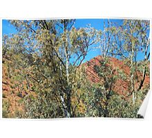 On a beautiful day - Brachina Gorge Poster
