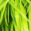 Summer Green Leaves by daphsam