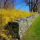 Spring Beyond ! by Nancy Richard