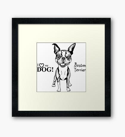 black and white Smiling dog Boston Terrier  Framed Print